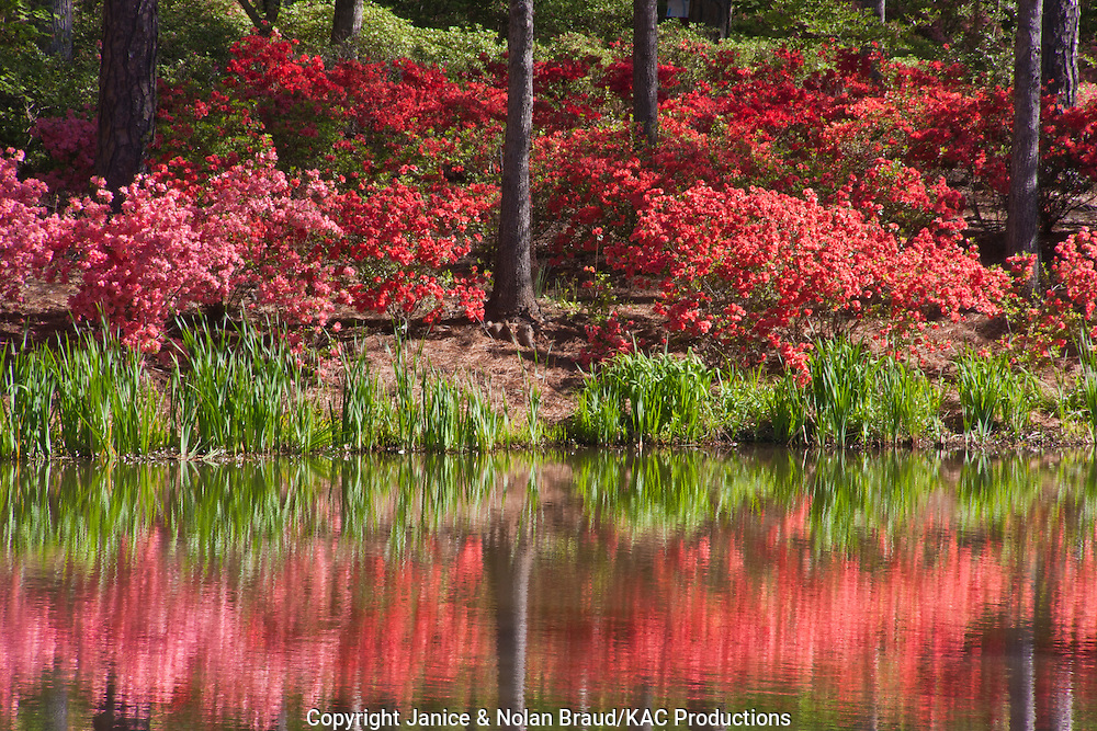 Azalea Bowl and Lake at Callaway Gardens JN051742jpg KAC