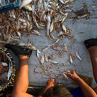 sorting fish and prawns on a fishing boat, Teluk Bahang, Penang, Malaysia