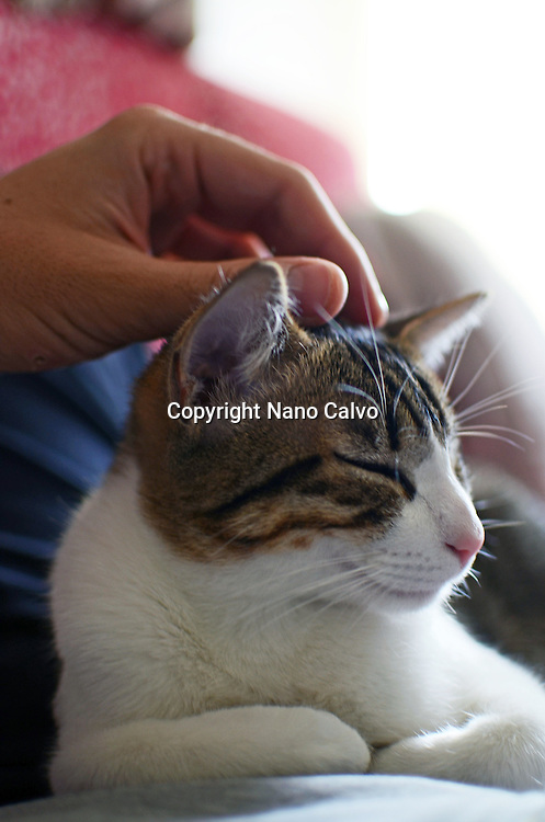 Kitten being caressed