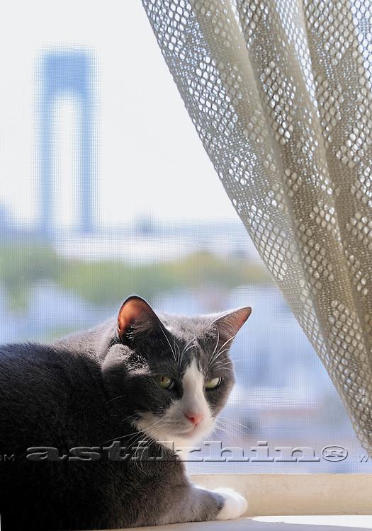 Domestic cat Tabasca in Brooklyn.
