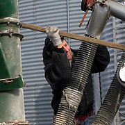 Terry Murray tries to fix a loose belt on the feed grinder on a cold January morning.<br /> <br />  Murray farms his family century farm near Storm Lake, Iowa, and hopes to pass the business down to his son David.  Murray has 2400 hogs and cultivates 900 acres of grain, rotating between corn and soybeans.    Photo by David Peterson