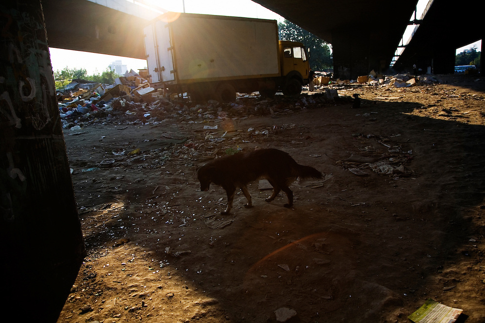 A dog wanders underneath the Gazela bridge in the Nova Gazela camp. Huge numbers of wild dogs and cats live in the Gazela settlements.