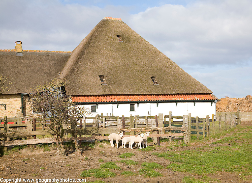 Sheep farm texel netherlands for Farm house netherlands