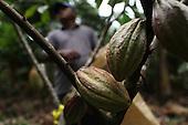 Costa Rica: APPTA Fairtrade Cacao