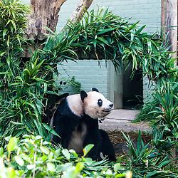 Yang Guang, Edinburgh Zoo's male giant panda, turns 10
