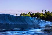 Hawaii waves with coconut trees