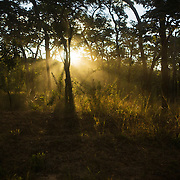 Rays of light coming throught the trees, Maua District, Mozambique.