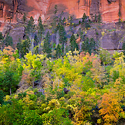 A tapestry of trees below the canyon wall.  At this point in the canyon the walls around about 2200-3000 feet tall
