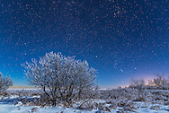 Orion and the stars of a northern winter rising in the moonlight over a snowy landscape at my house in southern Alberta, on a very cold and frosty -20&deg; C night on January 3, 2017. Illumination is from the waxing crescent Moon. Orion is at right, Gemini to the left, and Taurus at top right.<br /> <br /> This is a stack of 4 images for the ground to smooth noise, and one image for the sky, all 15 seconds at f/2.8 and ISO 1250 with the Nikon D750 and 24mm Sigma lens.