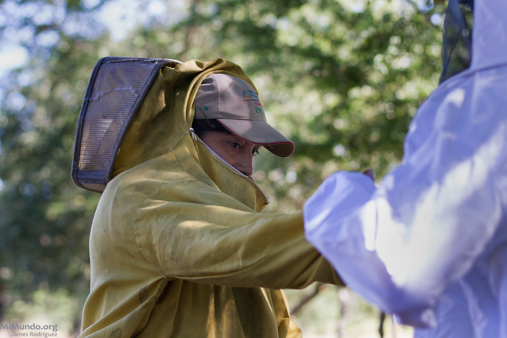 Santos Rene Valverde (right) helps his wife Estela Yaniet Espinoza Martinez remove her protective gear. Santos is officially the family's beekeeper affiliated to COOPSADES, a local co-op affiliated to UCASA (Union de Cooperativas Agropecuarias El Sauce). Nevertheless, the keeping of the family's 20 active beehives and the harvesting of honey is carried out by both members of the family. UCASA exports honey certified by the Fairtrade Labelling Organization (FLO). Las Tablas, El Sauce, León, Nicaragua. January 23, 2014.