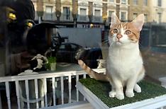 MAR 01 2014 Lady Dinahs Cat Emporium
