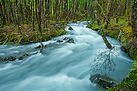 A glacial river winds its way through the forest in Patagonia. El Chalten, Argentina