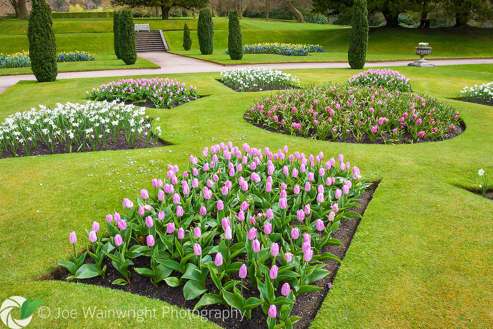 Tulips, hyacinths and daffodils bring spring colour to the formal gardens at Lyme Park, Cheshire.  Photographed in early May.