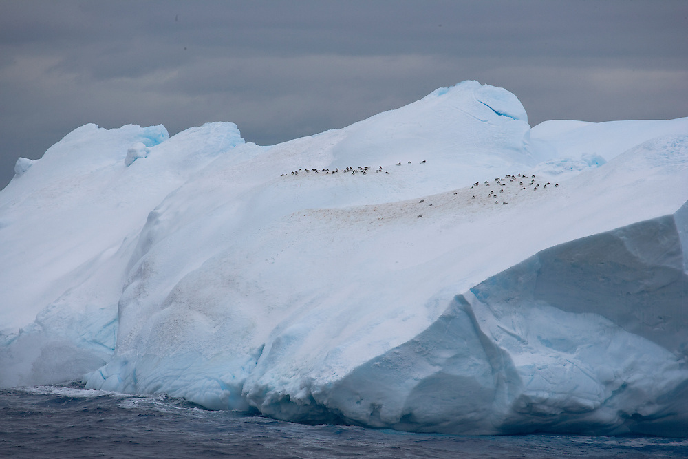 February 12th 2007. Southern Ocean. Birds rest atop an iceberg in the Ross Sea.