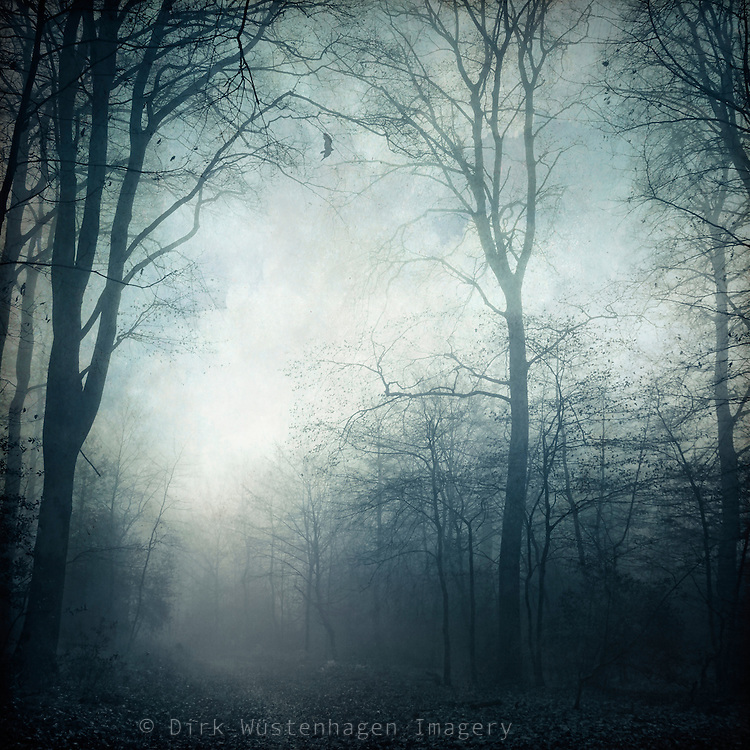 Path through a misty forest in November<br />