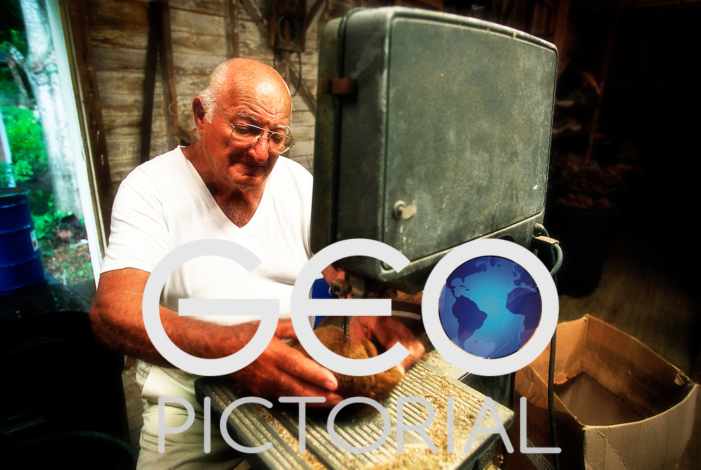 Tarpon Springs, Florida, USA; August 2003;.Sponge Merchant, Captain George Billiris trims and shapes sponges in his warehouse.