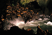 Image of Sea Lion Caves in Florence, Oregon, Pacific Northwest