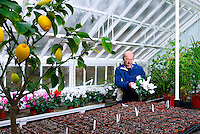 Gardner Paul Czaetwaki tending flowers in one of the estates glass houses. Brocklesby Estate