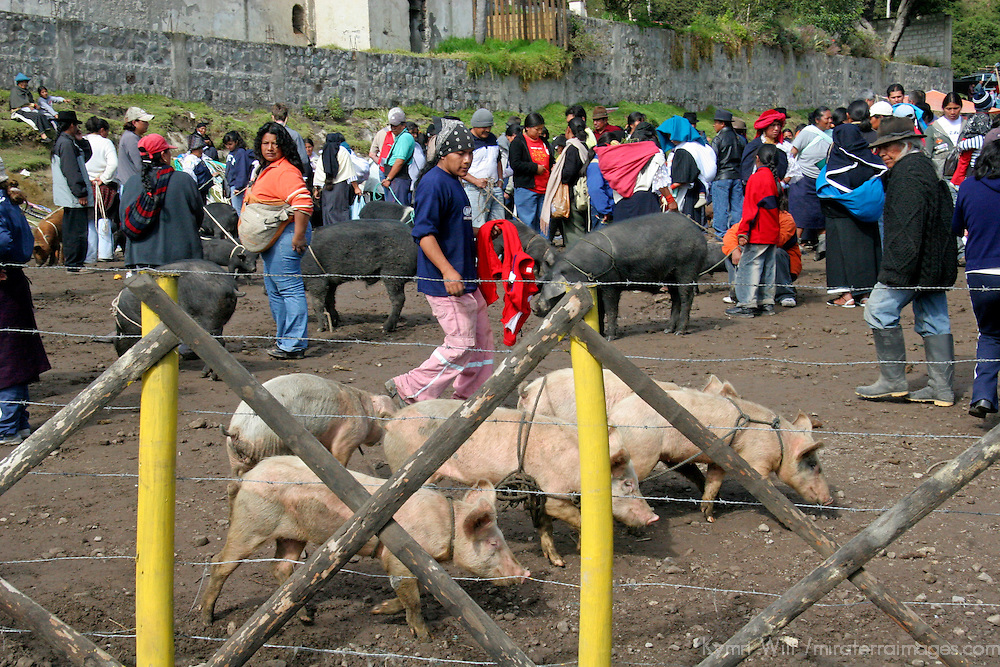 South America, Ecuador, Otavalo. Saturday morning market where locals come to buy and sell livestock and animals.