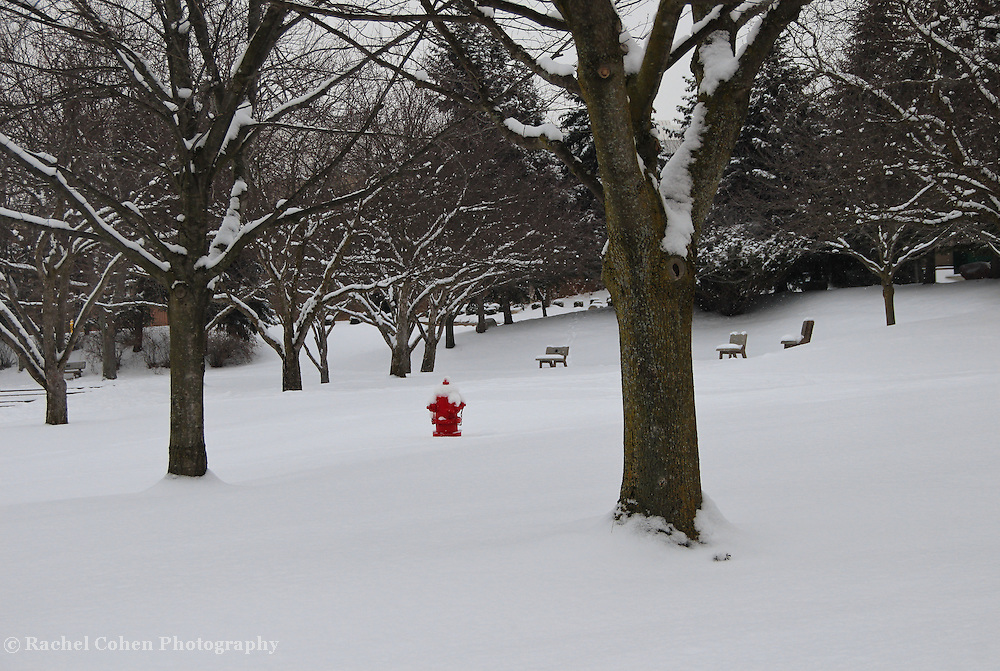 &quot;Little Red&quot;<br />