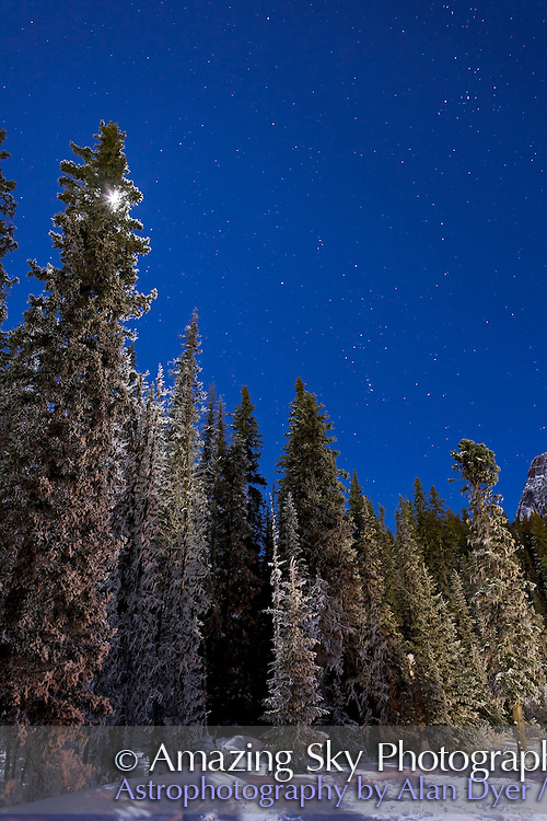 Orion above winter pine trees, at Lake Louise, Alberta, Feb 4, 2012 on a very clear moonlit night. Gibbous Moon is just out of the frame at top. This is a 15-second exposure at f/3.5 and ISO800 with Canon 5D MkII and Canon L-series 24mm lens. The Moon is just peeking thru at left.