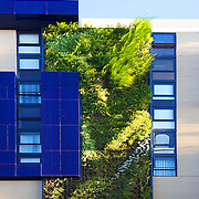 Patrick Blanc, a French botanist, has created his tallest vertical garden at a residential development in Sydney. The garden wall uses 4,528 native Australian plants that are fed by a grey-water dripper-irrigation system.<br /> Vertical gardens can offer a reduction in energy consumption through thermal insulation &amp; cut down on greenhouse gas emissions.