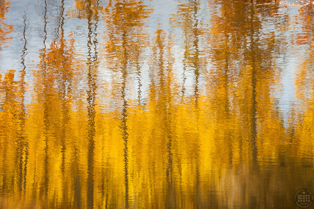 """""""Aspen Reflections 3"""" - Photograph of yellow aspen trees reflection in the fall at a pond near Spooner Lake, Nevada."""