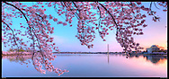 Panoramic photograph of Cherry Blossoms at Tidal Basin in Washington, DC with Washington Monument and Jefferson Memorial.  Print Size (in inches): 15x7; 24x11; 32x15; 36x17; 48x22; 60x28; 72x34