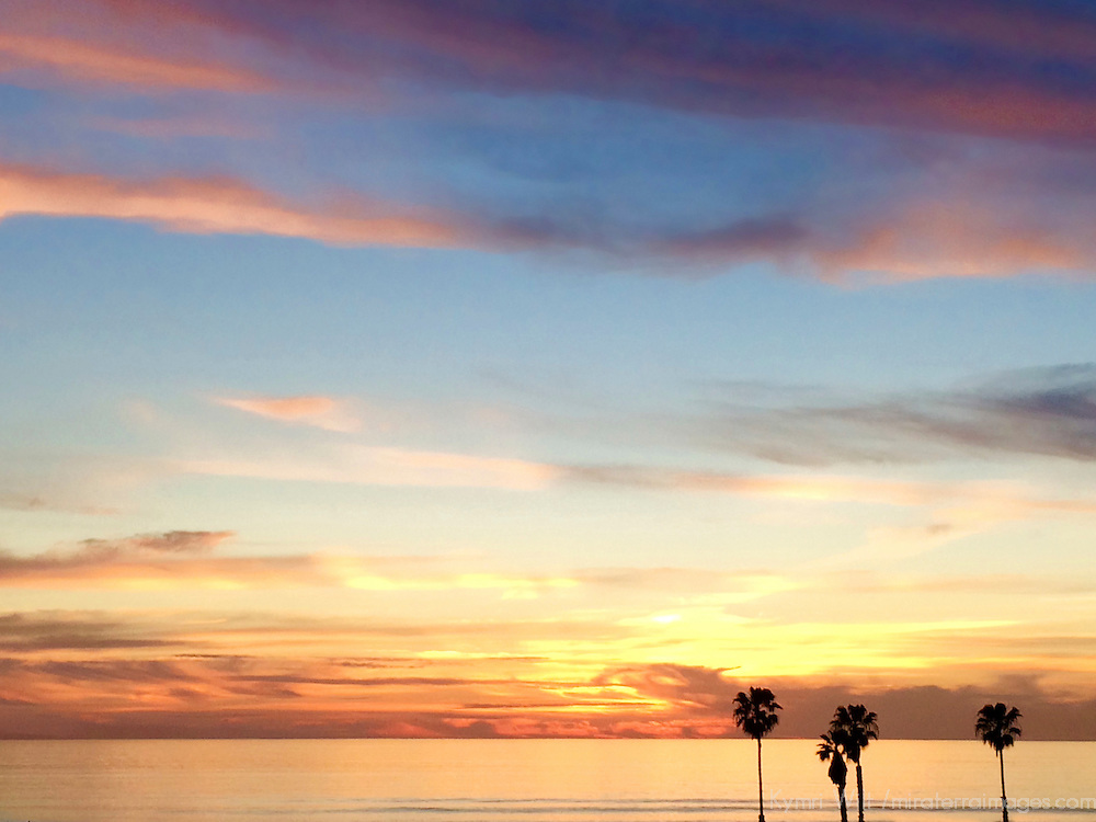 USA, California, Cardiff by the Sea. Palm Trees against sunset sky.
