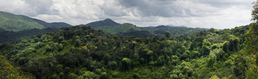 Panoramic view of Nyungwe forest, Rwanda